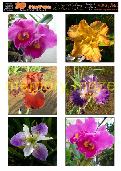 DS0701 assorted iris and orchids  MIN BUY 5  toppers cut out wit