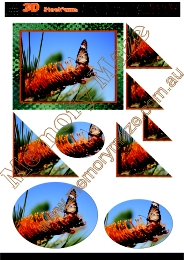Bottle brush orange with butterfly