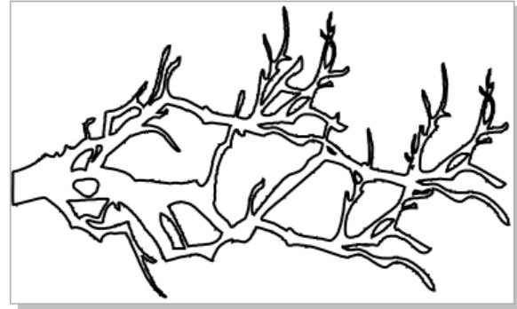 Olde branch100 x 60  2 pack  available 2 sizes